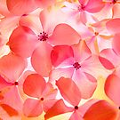 Hydrangea Macro by Gabrielle  Lees