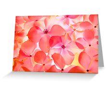 Hydrangea Macro Greeting Card