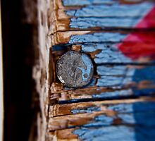 Tough as Nails- Arizona  by sarafureyphoto