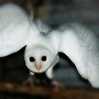 Owl Magic by Wendy  Slee