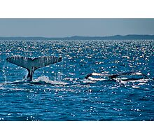 A pair of Whale Tails Photographic Print