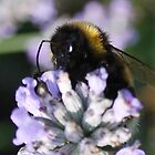 Bumble Bee by ScoobyMoo