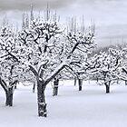 Stormy Snow Blossom Trail by Marilyn Cornwell