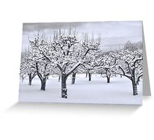 Stormy Snow Blossom Trail Greeting Card