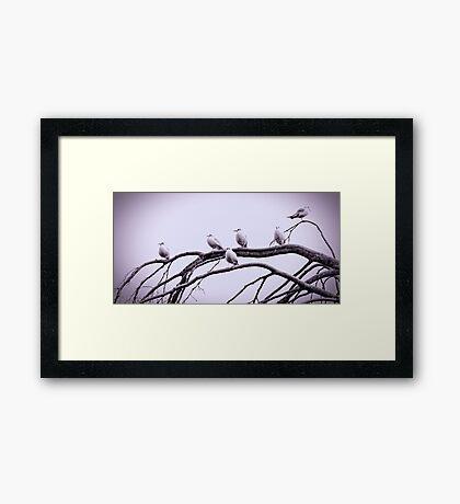Not so angry birds Framed Print