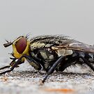 The Fly by Rick Playle