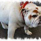 Darling Bulldog by Keala