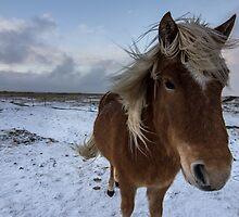 wild hair by JorunnSjofn Gudlaugsdottir