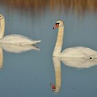 Swans by Peter Wiggerman