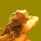 Dragon by Vitta