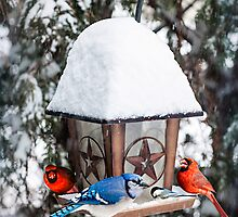 Birds on bird feeder in winter by Elena Elisseeva
