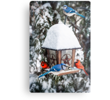 Birds on bird feeder in winter Metal Print