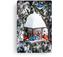 Birds on bird feeder in winter Canvas Print