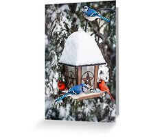 Birds on bird feeder in winter Greeting Card