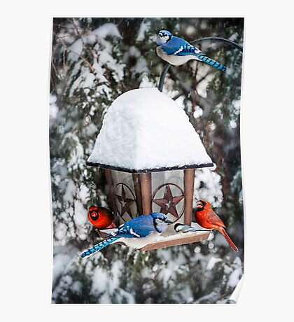 Birds on bird feeder in winter Poster