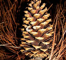 Pinecone by WildestArt