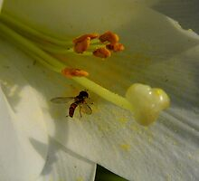 Hover Fly On The  Easter Lily by WildestArt