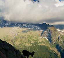 Ibex Silhouette  by MIRCEA COSTINA