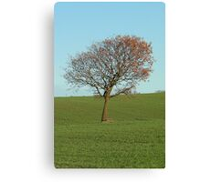 Out In The Middle Of Nowhere Canvas Print