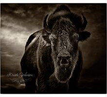 Bison V by kristijohnson
