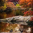 Autumn At The Duck Pond by Chris Lord