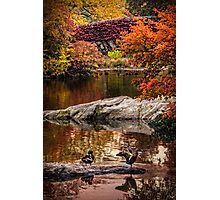 Autumn At The Duck Pond Photographic Print