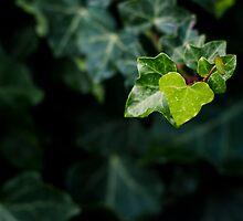 Find love in Nature by Samuel Webster
