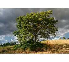 Arezzo, Tuscany (near Castelnuovo) #004 Photographic Print