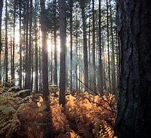 Autumn Sunrays by jeremyab