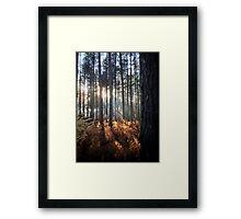 Autumn Sunrays Framed Print