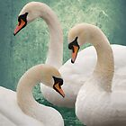 OCEANIC SWANS by Nikella