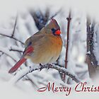 Cardinal Christmas Card by Sandy Keeton