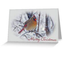 Cardinal Christmas Card Greeting Card