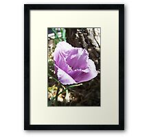 The flower with the fringe Framed Print