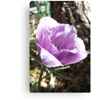 The flower with the fringe Canvas Print