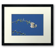 Blossoms and Sky Framed Print