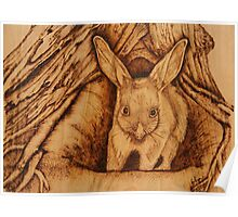PYROGRAPHY: Bilby Poster