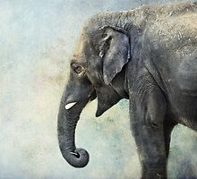 Elephant for Ali by vigor