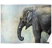 Elephant for Ali Poster