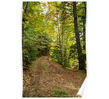Trail Split in Autumn Poster