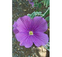 Desert Flower Photographic Print