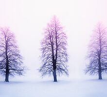 Winter trees in fog at sunrise by Elena Elisseeva