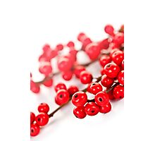 Red Christmas berries Photographic Print