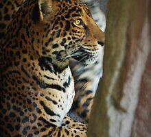 Mother Jaguar In Her Den by Ian Phares