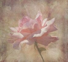 Soft Pink Grunge Rose by Rosalie Scanlon
