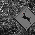 Caution: Reindeer Crossing by Scott Mitchell