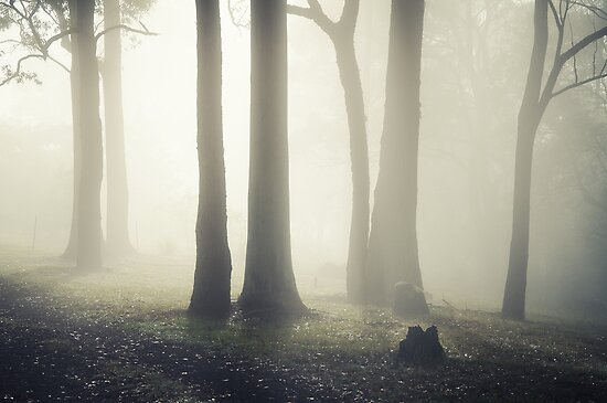 Shrouded trees by ozzzywoman