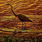 Fire bird by GeoffSporne