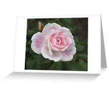 Blushing Pink Iceberg Greeting Card