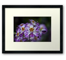 A Touch of Violet Framed Print